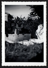 SOFT SURREAL MEMORY oF SQUIRMING KITTEN CATS in BASKET ~ 1940s VINTAGE PHOTO