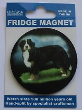 Bernese Mountain Dog - Fridge Magnet - Welsh Slate