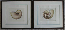 2 Marina seashell prints engravings G.W. Knorr framed German 10 by 9 inches