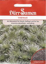 Wermut Absinth mehrjährig Artemisia absinthium 800 Korn Dürr Samen