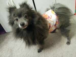 """""""Cumber-Blunder"""" Belly Band for Male Dogs - Tie Dye Horses - M/L"""