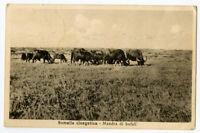 Somalia Photo Card black & white Scarce Early tied Stamps Pr