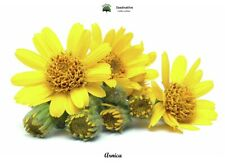 Arnica Montana - Arnica - 30 Seeds
