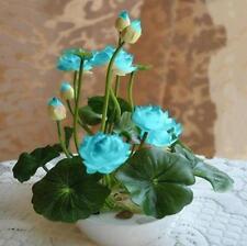 Bowl Lotus Seed Hydroponic Plants Aquatic Plants Flower -10pcs
