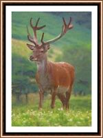 Stag 01, New & Exclusive Cross Stitch Kit