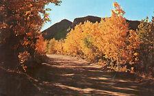 postcard USA    Colorado  autumn in the rockies  near Criple Creek unposted