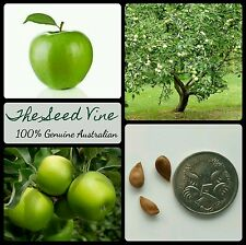 5+ GRANNY SMITH APPLE TREE SEEDS (Malus 'Granny Smith') Juice Cooking Pie