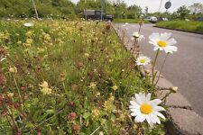 Wild Flower -  Meadow Seed Mix for Chalk and Limestone 4g