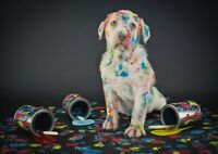 A1 Funny Colorful Dog Picture Wall Poster Art Print 60 x 90cm 180gsm Gift #15603