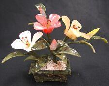 Chinese Jade Peony Flower Plant