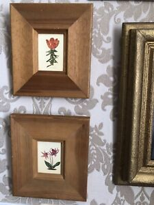 Pair Of Botanical / Flower Miniature Pictures In Wooden Frames
