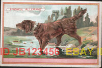 DOG German Spaniel Victorian Advertising Trade Card Trading, French C. Beriot
