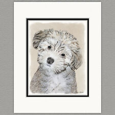 Havanese Puppy Dog Original Print 8x10 Matted to 11x14