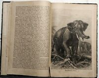 1899 Russian Antique Book Excerpts Alfred Brehm Life of Animals Elephants Rhinos