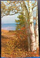 Silver Birch Great Lake Michigan Vintage Postcard
