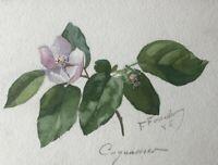 SUPERBE DESSIN ORIGINAL ANCIEN ETUDE DE FLEURS BOTANIQUES VERS 1886 (3)