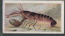 Lobster Marine Crustaceans Edible Fishing Sea Ocean Vintage Trade Ad Card