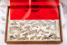 Large Wooden Ant Hybrid Nest with red filter Ant Housing Ant Farm Formicarium