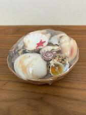 Collection of Sea Shells in Round Wood Wicker Basket Nature Decor