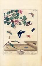 Schmetterlinge-Insekten-Pflanzen-Bäume-Entomologie Kupferstich Moses Harris 1840