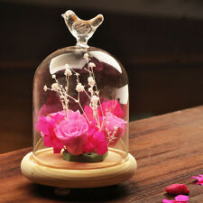 Terrarium Container Bird Glass Cloche Dome Cover Display  Miniature Bell Wood