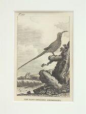 Promerops sugarbird-BUFFON montato Antico Bird Stampa Incisione c.1805 158