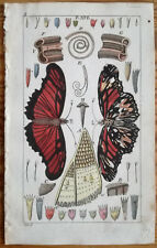 Wilhelm: Handcolored Engraving Butterfly Moth (22) - 1800