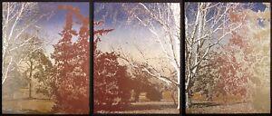 "Paula Crane ""Quadrille I, II, III"" Signed Triptych 3 Fine Art Etchings trees OBO"