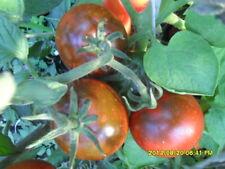 """Ungarische Tomatensamen """"Kumato"""",ertragreiche, legendäre organische Tomaten"""