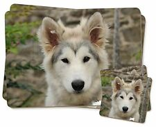 A Pretty Siberian Husky Puppy Dog Twin 2x Placemats+2x Coasters Set in, AD-GL1PC
