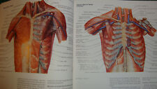 Ciba Collection of Medical illustrations anatomy respiratory system human lungs