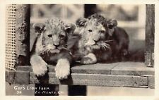 Real Photo Postcard Lion Cubs Gay's Lion Farm in El Monte, California~126246
