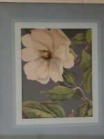 "Botanical Vintage Lithograph/Print ""Magnolia Flowers""  Unsigned/Unmarked"