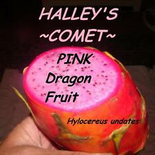 ~HALLEYS COMET~ DragonFruit Red Skin Pink Plup Pitaya Hylocereus 100+ Seeds