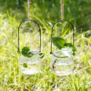 Plants Flower Glass Vase Hydroponic Pot Hanging Home Decor Pumpkin Shape