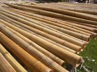 Bambusstangen Bambus Bambusrohre Bambusstange Bambushalm 20 Stk. 195 cm Ø 3-4 cm
