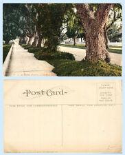 Marengo Avenue Pasadena California c1912 Postcard Trees Shrubs
