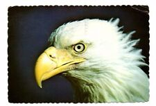 Bald Eagle - US Bird Postcard