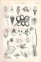 1880 Aufdruck ~Botanik~Blumen~ Samen Blütenblätter Blätter Frucht Usw