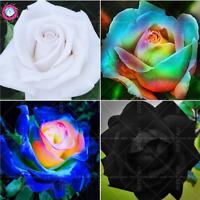 Bonsai Rose Rare Flowers 100 PCS Seeds Perennial Plants Garden Free Shipping NEW