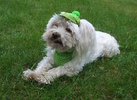 Perros Gorra - Tapa Cape - Juego Cappy + Pañuelo Verde Dots Hundecappy