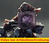 7753 Fluorite Sphalerite ca 6*8*6 cm 1997 Elmwood Mine Tennessee USA MOVIE