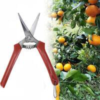 sécateurs orchard garden plant ciseaux branch trimmer cisaillement de taille