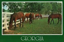 Horses Grazing in Georgia, The Peach State, White Fence -- Animal Horse Postcard