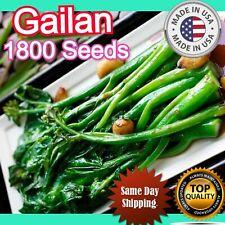 5g 1,800+ GAILAN seeds Gai Lan KAILAN KAILAAN; Dark Green Glossy Kale 特油芥蘭 USA