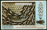 Honey Bee Building A Comb Apiary 1920s Trade Ad Card