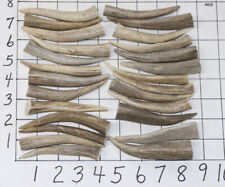 """Pendants -Size : 2.5/"""" to 4/"""" A Grade 12Pack Deer Antler Brow Tine Tips Points"""