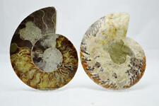 "Cut Split Pair Ammonite Deep Crystal Cavity 110myo Fossil 153mm Xxl 6.1"" e2970yy"