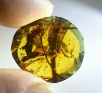 Leafs In Authentic Dominican Amber Fossil Gem Stone Natural (2.2 G)A419