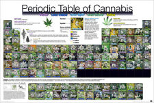 MARIJUANA PERIODIC TABLE OF CANNABIS POSTER (61x91cm)  NEW WALL ART